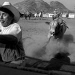 004-taureau
