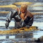 009-pollution-huile-dalian-liaoning