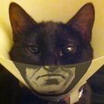 chat-collerette-batman