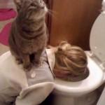 chat-sur-femme-vomie-wc