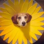 chien-fleur