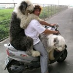 chien-scooter