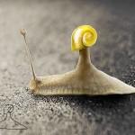 dessin-enfant-escargot