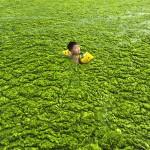 enfant nage dans algues
