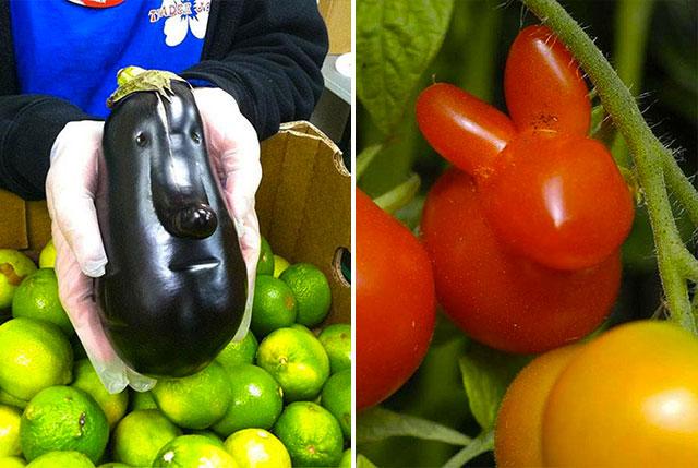 fruits et legumes moches