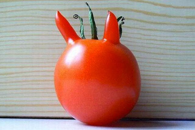 tomate lapin