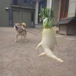 fruits et legumes moches chien