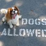 chien rebelle