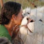 lion albinos