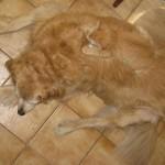 camouflage chat et chien