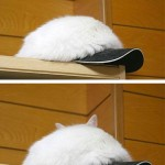 camouflage chat casquette