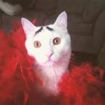 sam le chat inquiet