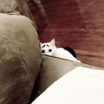 chat inquiet