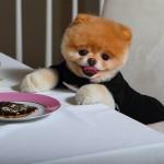 chien boo mange