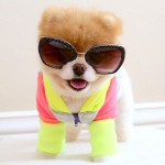 chien boo lunettes