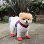 chaussures chien boo