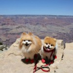 chien boo grand canyon