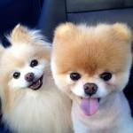 chien boo et son copain