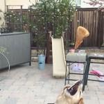 chien slow motion
