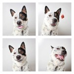 chien-photomaton-10