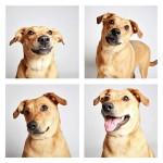 chien-photomaton-13