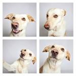 chien-photomaton-16