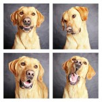chien-photomaton-30