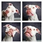 chien photomaton