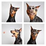 chien-photomaton-33