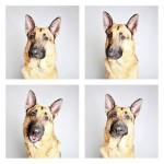 chien-photomaton-6