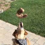 chien-slow-motion