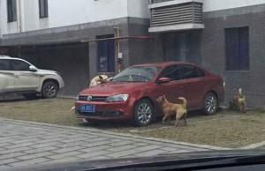 vengeance chien