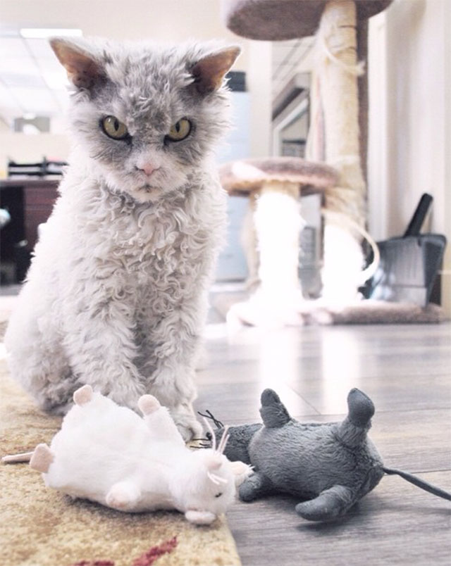 albert le chat