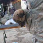 animaux soldats