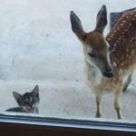chat et biche
