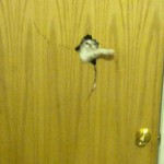 chat défonce porte