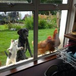 animaux voulant rentrer