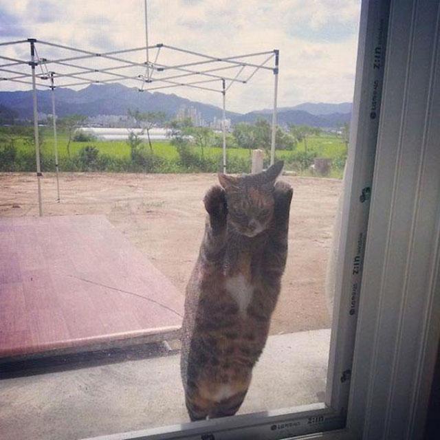 animal voulant rentrer