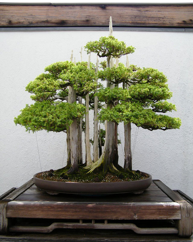 bonsaï Goshin