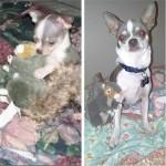 animaux et jouet