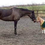 cheval très petit