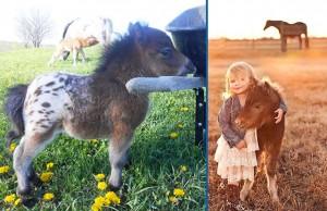 mini cheval