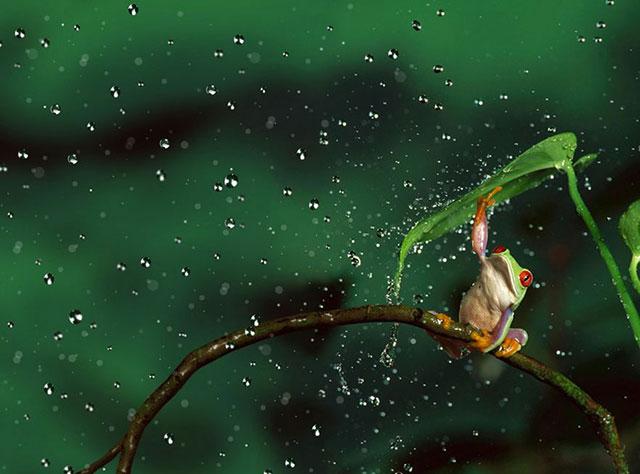 parapluie naturel animaux