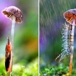 parapluie-animaux-20
