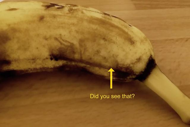 banane araignée