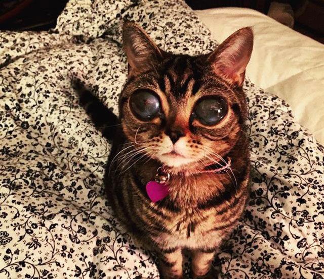 chat extraterrestre
