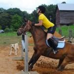 photo bon moment cheval
