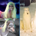 ressemblance bizarre