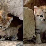 chat-des-sables (5)