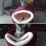 logique chat
